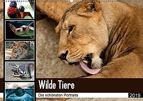 Wilde Tiere - Die schönsten Portraits (Wandkalender 2019 DIN A2 quer): Die schönsten Tierportaits für das ganze Jahr (Monatskalender, 14 Seiten ) (CALVENDO Tiere)