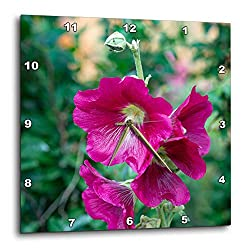 3dRose Alexis Photography - Flowers Malva Mallow - Nice Purple Malva, Mallow, malvaceae, Flowers, Dark Green Background - 10x10 Wall Clock (DPP_319942_1)