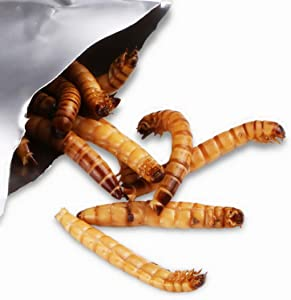 Reptile Worms Food Fresh Mealworms Food for Bearded Dragon, Lizard, Turtles, Chameleon, Monitor, Frog, Chickens, Ducks, Wild Birds, Fish, Hamsters and Hedgehogs (Not Live) (Mealworms)
