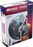 medical anatomy models - 4D Vision Human Anatomy Torso Model