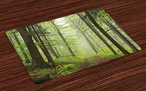 Outdoor Place Mats Trail Trough Foggy Alders Beeches Oaks Coniferous Grove Hiking Theme Washable Fabric Placemats for Dining Room Kitchen Table Decor Pale Green Pale Yellow 24 x 16 inch