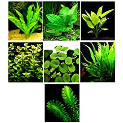 15 Live Aquarium Plants / 7 Different Kinds - Custom Combo (Anubias, Amazon Sword, Java Fern, Moss Much More!) Great Plant Sampler for 4-5 gal. Tanks!