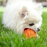 Hartz Dura Play Bacon Scented Dog Ball - Small (Colors Vary)