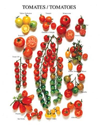 Tomates/Tomatoes Poster Art Print