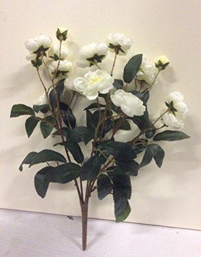 Bush Cream (New Camellia Rose Bush Ivory/Cream Artificial Silk Flowers Bush by Shades)