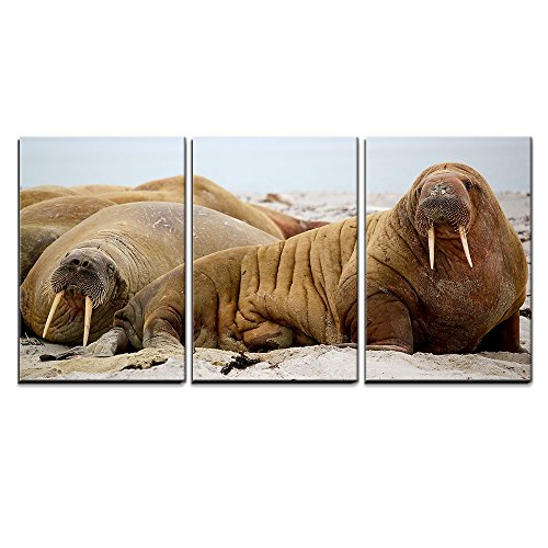 "Wall26 - 3 Piece Canvas Wall Art - Walrus Lying on the Beach - Modern Home Decor Stretched and Framed Ready to Hang - 24""x36\""x3 Panels"