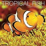 Tropical Fish 2021 Wall Calendar
