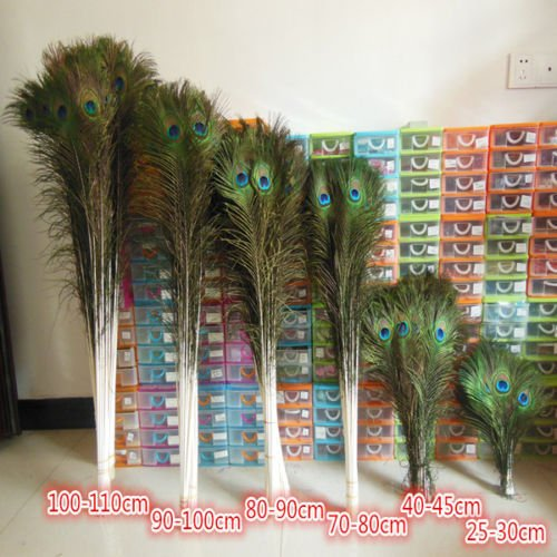 Wholesale ! beautiful natural peacock feathers eyes 50pcs 10-40 inches/25-100 -