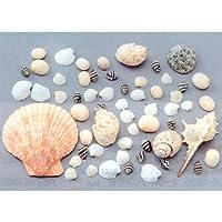 いろいろな貝がら 約100g M70【造形素材・図工・生活 貝・粒状素材】B05-1607
