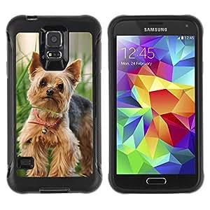 Exotic-Star Hybrid Heavy Duty Shockproof Ballistic Fundas Cover Cubre Case para Samsung Galaxy S5 V SM-G900 ( Feliz linda de Yorkie Terrier )