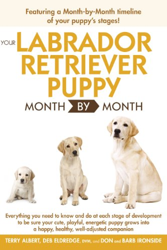 Golden Retriever 2 Months Weight Your Labrador R...