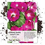 Seed Needs, Scarlet O' Hara Morning Glory (Ipomoea nil) 100 Seeds Untreated