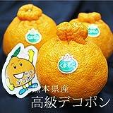 【 熊本県産 】デコポン 熊本が誇る本物のデコポン!! ( お試し 箱込 約2kg ( 6~10玉 ))