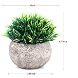 The Bloom Times 2 Pcs Fake Plants for Bathroom/Home Office Decor, Small Artificial Faux Greenery for House Decorations