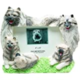 keeshond picture frame holds your favorite 4 x6 inch photo a hand painted realistic looking