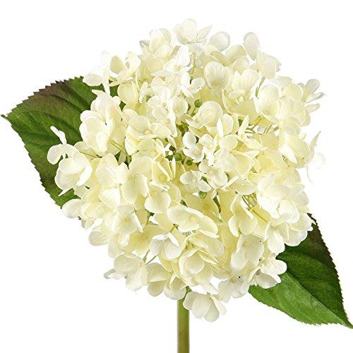 Rinlong Artificial Silk Hydrangeas Flowers Stems Cream for Flowers Arrangement Home Party Wedding Decor (Cream) (Hydrangea Cream)