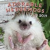 Adorable Hedgehogs 2019: 16-Month Calendar - September 2018 through December 2019