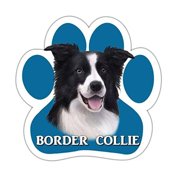 Border Collie Car Magnet With Unique Paw Shaped Design Measures 5.2 by 5.2 Inches Covered In UV Gloss For Weather Protection 1