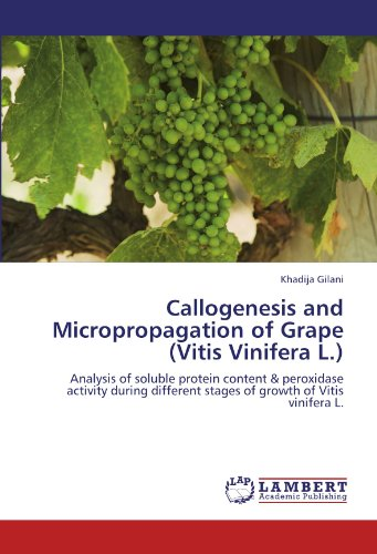 Callogenesis and Micropropagation of Grape (Vitis Vinifera L.): Analysis of soluble protein content & peroxidase activity during different stages of growth of Vitis vinifera L.