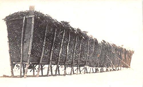 Corn Minnesota (Directions for Building Wire Corn Cribs Minneapolis, Minnesota postcard)