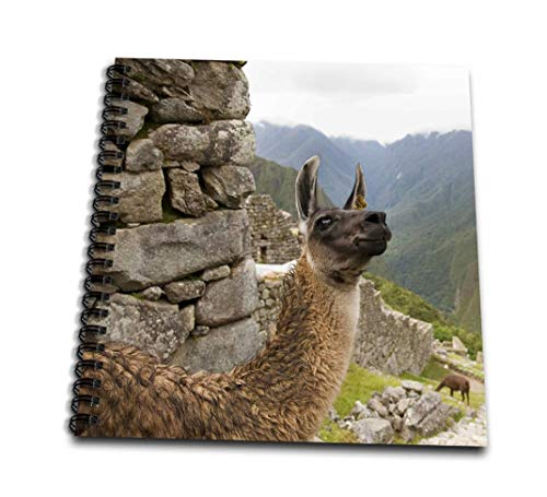 3dRose db_86975_3 Peru, Machu Picchu, Llama in The Stone ruins-SA17 BJA0239-Jaynes Gallery-Mini Notepad, 4 by 4