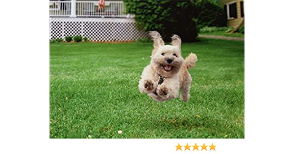 Amazon Running Dog Funny Birthday Card Office Products