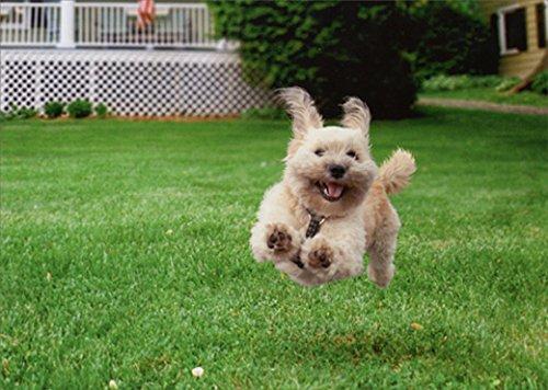 (Running Dog Funny Birthday Card)