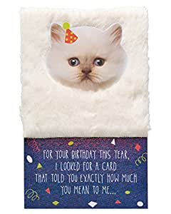 Amazon American Greetings Funny Kitten Birthday Card With Foil