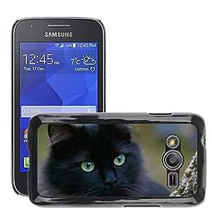 Etui Housse Coque de Protection Cover Rigide pour // M00113848 Negro Gatos gato Retrato Del Gato // Samsung Galaxy Ace4 / Galaxy Ace 4 LTE / SM-G313F