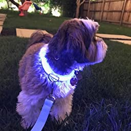 Amazon.com : Clio Illuminated LED Rechargeable Dog Collar ...