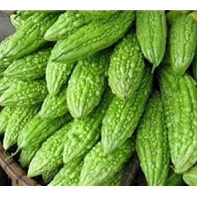 Philippine Dept. of Agriculture Ampalaya 20 Seeds Bitter Melon Vegetable : Garden & Outdoor