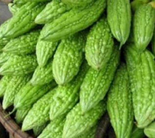 Philippine Dept. of Agriculture Ampalaya 20 Seeds Bitter Melon Vegetable