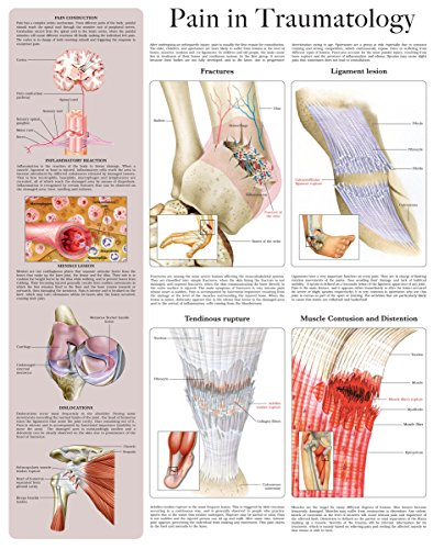 Pain in Traumatology e-chart: Quick reference guide