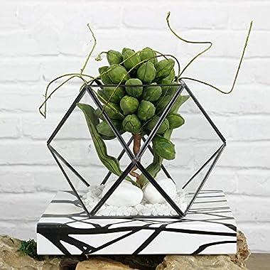 Noah Decoration Pentagon Succulent/Air Plants Glass Terrarium/ Candle Holder container Black