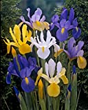 Bloomsz 9835 Mix Dutch Iris (50-Pack)