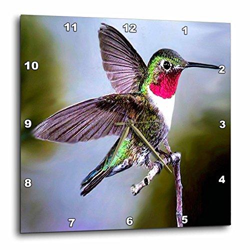 Birds – Hummingbird, Bird – 15×15 Wall Clock (dpp_960_3) For Sale