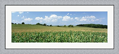 Corn Crop In A Field, Wyoming County, New York State, USA by Panoramic Images Framed Art Print Wall Picture, Flat Silver Frame, 44 x 20 inches
