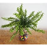 lily-garden-12-artificial-rosemary-soft-plastic-package-of-6