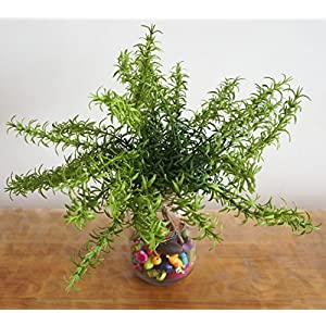 """Lily Garden 12"""" Artificial Rosemary Soft Plastic- Package of 6 5"""