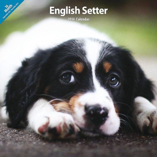 English Setter 2014 Wall Calendar
