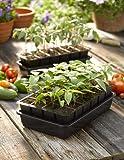 GrowEase Self Watering Seed Starter Kit, 24 Cells