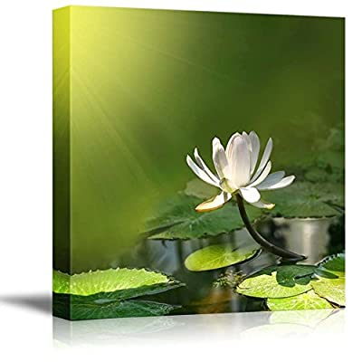 Canvas Prints Wall Art - Water Lily/Lotus with a Green Background Calmness Concept | Modern Wall Decor/Home Decoration Stretched Gallery Canvas Wrap Giclee Print & Ready to Hang - 24