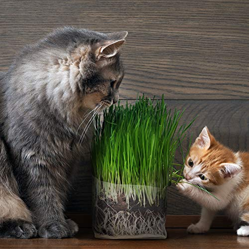 Cat Grass Grow Bag Kit, 3 Pack, All Organic, Just add Water. Made in The USA