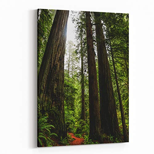 Rosenberry Rooms Canvas Wall Art Prints - Giant Redwood Trees in Prairie Creek Redwoods State Park, California (16 x 20 inches)
