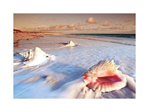 PHOTO SEASHELLS HOLIDAY FRAMED F12X5442 product image