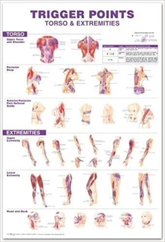 Trigger points giant chart anatomical chart company 9780781782128