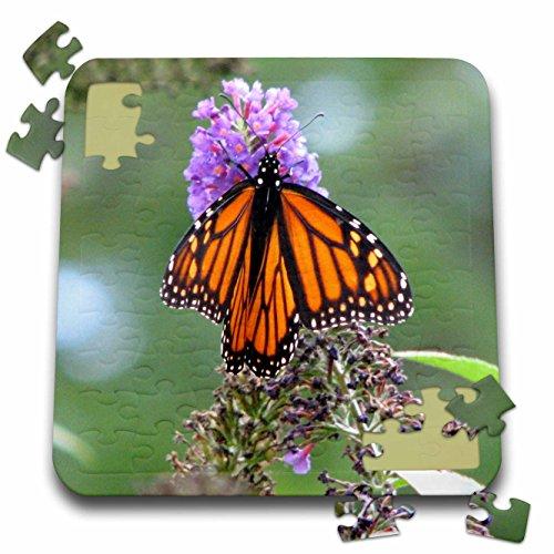 Bob Molchan Photography Nature - Butterfly Flowers Monarch Orange Purple - 10x10 Inch Puzzle (pzl_27253_2) ()