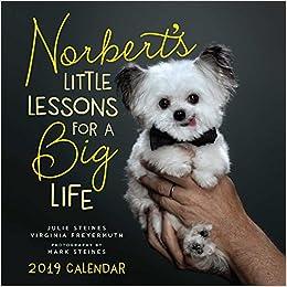 animal memes wall calendar 2019