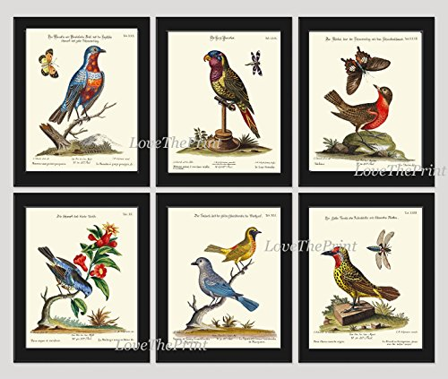Bird Print Set of 6 Art Prints Antique Beautiful Blue Red Yellow Birds Parrot Butterfly Dragonfly Flowers Tree Branch Green Leaves Home Room Decor Wall Unframed CTB ()