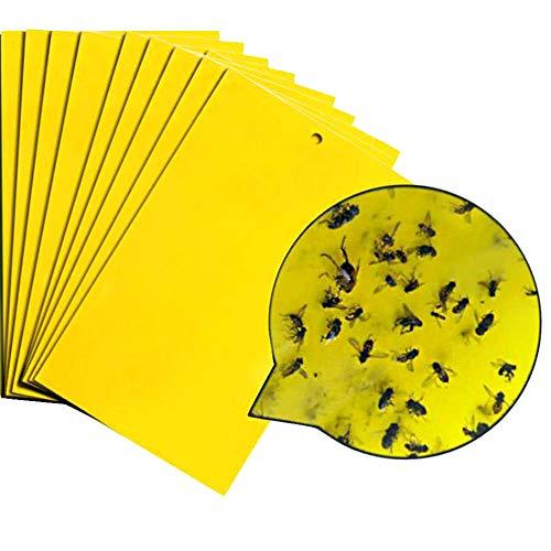 Best Pest Strips Indoor Professional Infestis Com